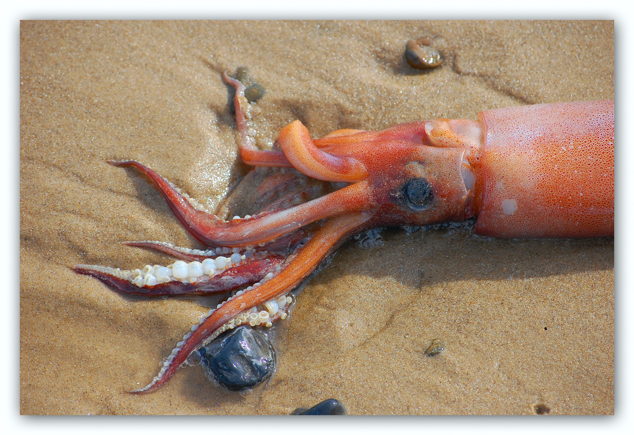 Squid No Go: Korean Woman's Mouth Gets Inseminated by a Squid