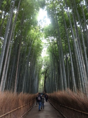 Traveling Japan: Arashiyama Bamboo Forest